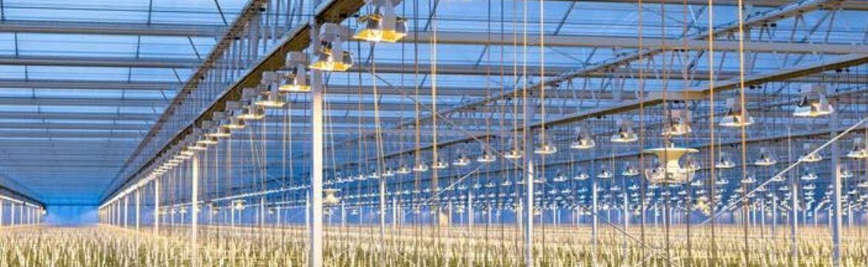 groeilichtinstallatie onderhoud