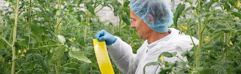 Wie starte ich mit integriertem Pflanzenschutz
