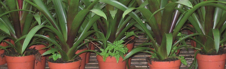 Herbiciden
