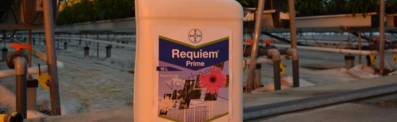 Requiem prime