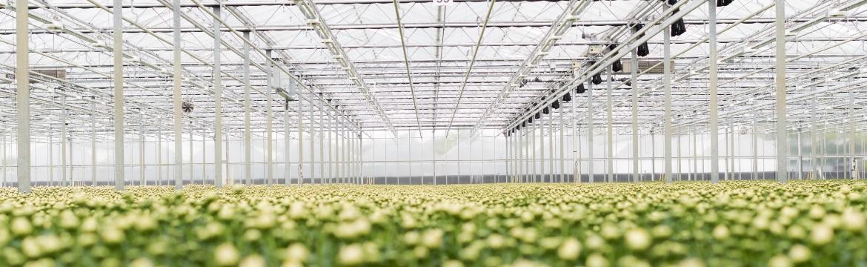 De risico's in de glastuinbouw