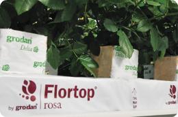 Flortop Rosa