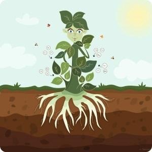 Plantversterkende bladmeststoffen inzetten
