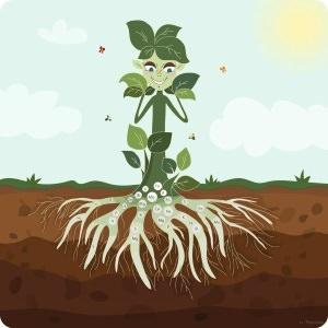 Plantversterkende meststoffen inzetten