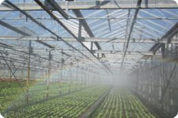 Beregening als irrigatiesysteem