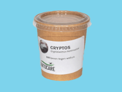 Cryptolaeumus (100 larven)