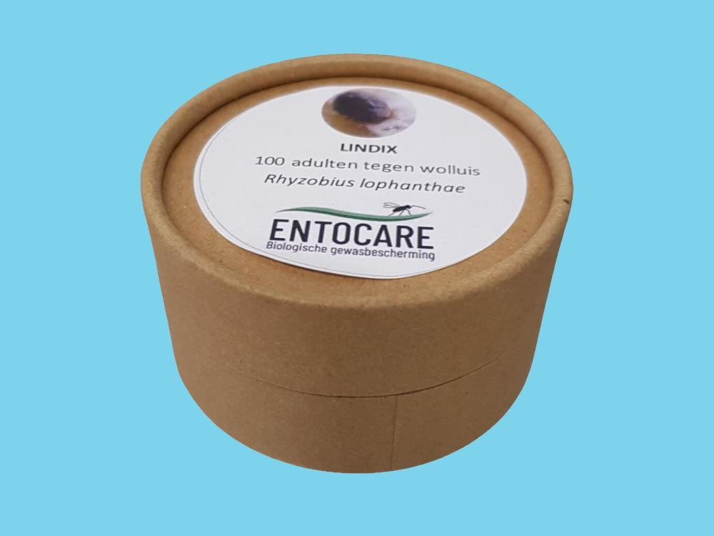 LINDIX Rhyzobius (Lindorus) lophanthae (100 stuks)