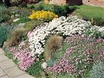 Bloemenmengsel voor lage meerjarige bloemen 250 gram
