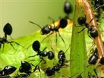 Hoe kan je mieren bestrijden?