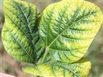 Hoe voorkom je een kalium tekort bij planten?